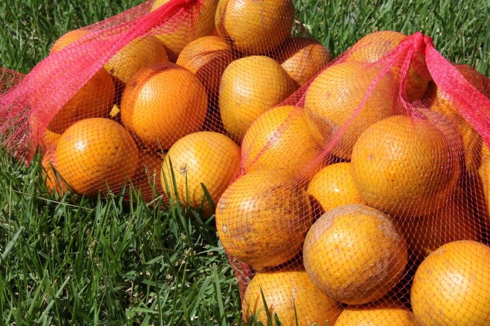 last of the citrus | aneelee.wordpress.com