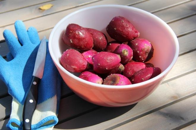 splitting prickly pears | aneelee.wordpress.com