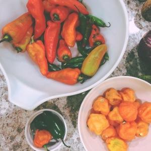 veggie meal plan - july 20   aneelee.com